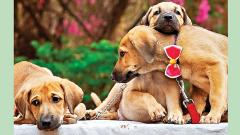 Wag-A-Bond to hold puppies and kittens adoption drive tomorrow