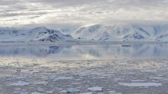 Remains of ancient rainforests discovered in Antarctica
