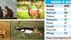 Animal census shows increase in population