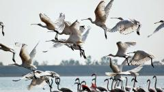 Rains May See Migratory Birds Arrive Late