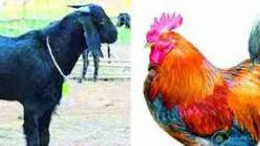 Chicken, mutton get costlier in Pune