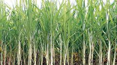 City water quota being diverted for cash crops