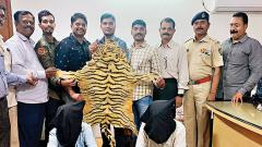 Two Men Caught With Tiger Skin