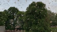 Locust swarm puts Delhi airport on high alert