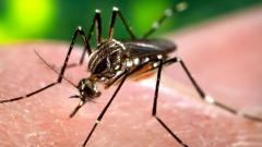 USA: LA County reports first West Nile virus death in 2020