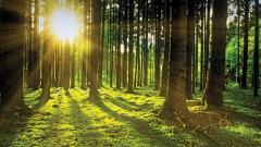 Forest cover in the State up by 95.56 sq km since 2017: ISFR