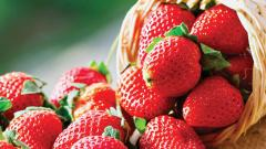 Rains affect strawberries, will come late and costlier