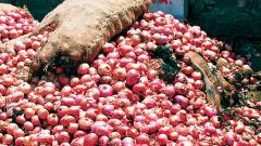 Supply woes continue to drive up retail and wholesale onion prices