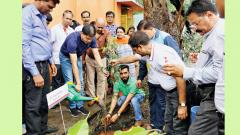 Tree plantation drive conducted in the city