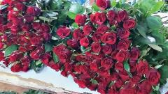 Valentine's Day rose sales bring cheer to Maval taluka