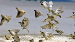 101 bird species need 'high conservation concern'