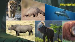 World Wildlife Day 2020: 7 animals that are on the verge of extinction