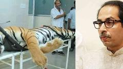 Committee set up to probe tigress' killing a farce