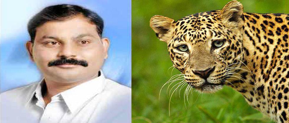 At the request of the MLAs, the Forest Department issued an order to kill the leopard