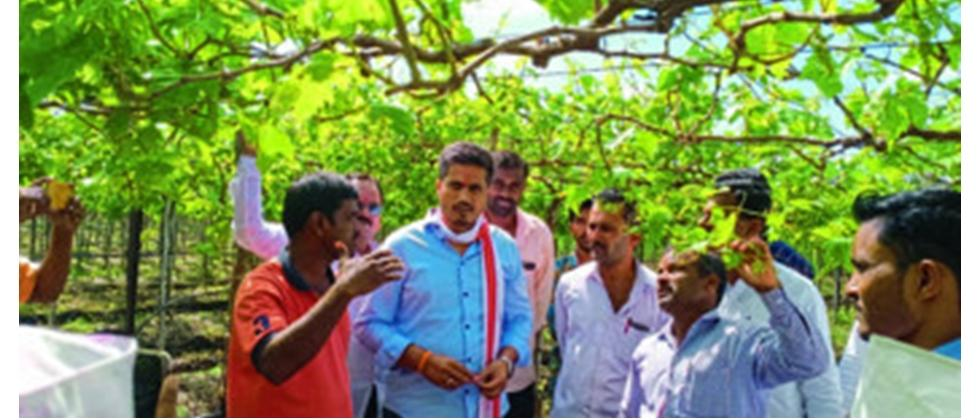 NCP Rohit Pawar Visiting Farms