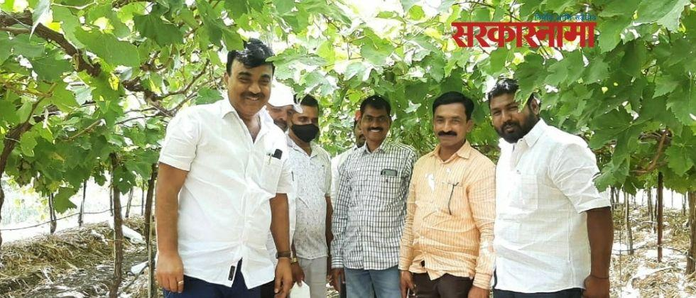 BJP leader Kalyan Kale inspects exportable vineyards in Barshi