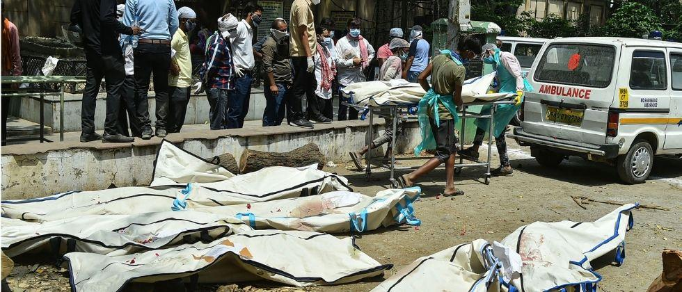 in india total covid deaths 25 percent are from maharashtra state