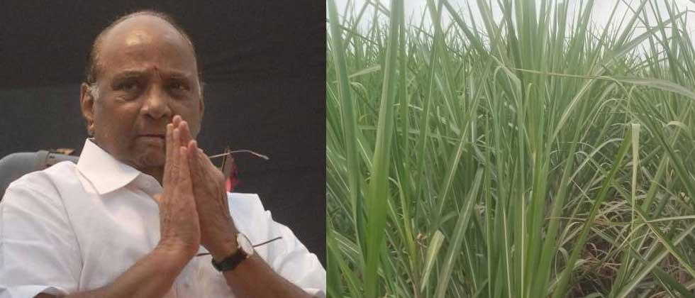 Sharad Pawar help chaudharwadi which village of father-in-law