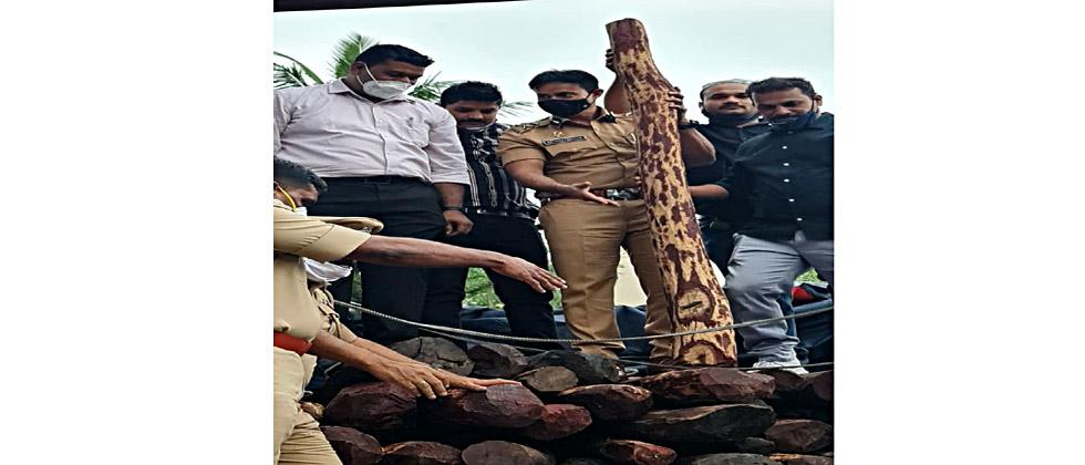 Police seized blood sandalwood worth Rs 6.5 crore from a car without number plate