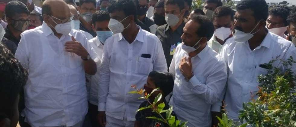 Sharad Pawar inspects pomegranate orchard in Atpadi