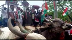 Bulls refuse to carry 'donkeys': Bhai Jagtap's political balance is gone