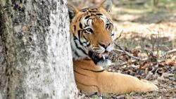 Central Government Plans Coal Mine Near Chandrapur Tiger Reserve