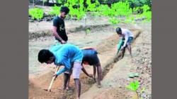 At Palsamba, the youth undertook the work of water scheme