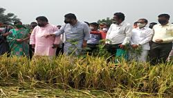 BJP Leader Pravin Darekar Visited Affected Farms In Jawoli taluka  With MLA Shivendraraje Bhosale