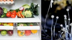 black fungus is not spread through vegetables stored in refrigerator
