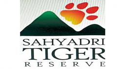 Rehabilitation of three villages in the core zone of Sahyadri Tiger Project stalled