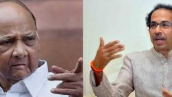 Thackeray and I know what Parner's subject is: Sharad Pawar