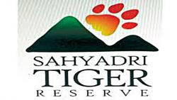Sahyadri Tiger Reserve Bogus forester recruitment; Inquiry of the then officers